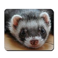 Ferret-01-11x11-DBArtPanels1 Mousepad