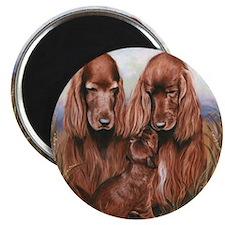 Irish_Setter_Dogs Magnet