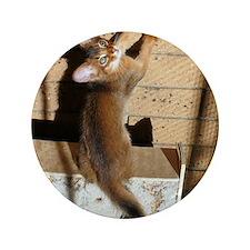 """somali kitten 3.5"""" Button"""