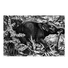 Elephant Rampage Postcards (Package of 8)
