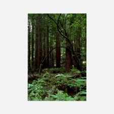 Muir Woods Rectangle Magnet