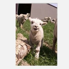 BabyLamb (2) Postcards (Package of 8)