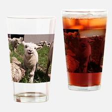 BabyLamb (2) Drinking Glass