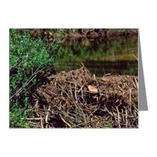A beaver dam. Note Cards (Pk of 20)