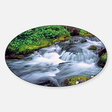 Mt Adams Wilderness. Bird Creek cas Sticker (Oval)
