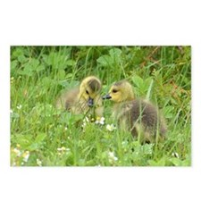 Goslings In Clover Postcards (Package Of 8)