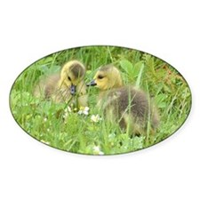 Goslings in clover Decal