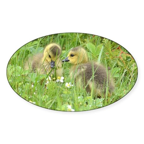 Goslings in clover Sticker (Oval)