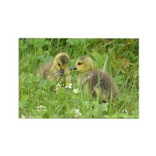 Goslings In Clover Rectangle Magnet