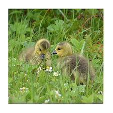 Goslings in clover Tile Coaster