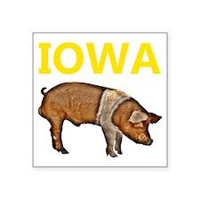 "IOWA pig transp.gif Square Sticker 3"" x 3"""