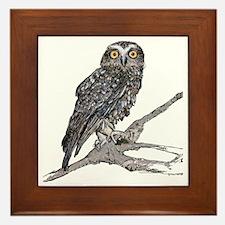 Southern Boobook Owl Framed Tile