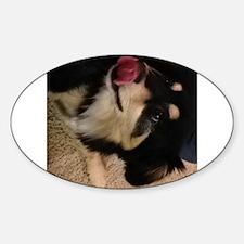 finnish lapphund puppy licking Decal