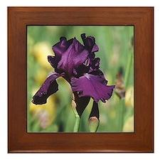 Iris Framed Tile