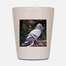 PigeonPil Shot Glass