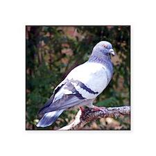 "pigeonMP Square Sticker 3"" x 3"""