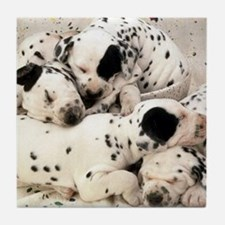 Dalmation sm fr pan print Tile Coaster