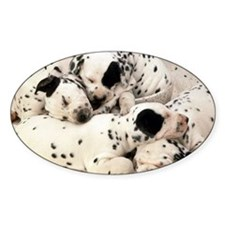 Dalmation sm fr pan print Decal