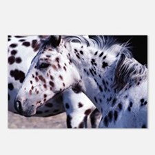 Horse Spot lg print Postcards (Package of 8)