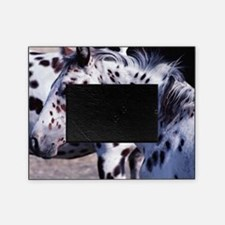 Horse Spot lg print Picture Frame