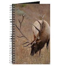 Number 10  mspd Journal
