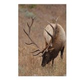Elk Postcards