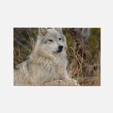 Wolf 10x14 Rectangle Magnet