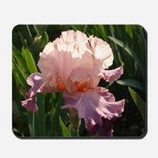 Pink and lavender Iris Mousepad