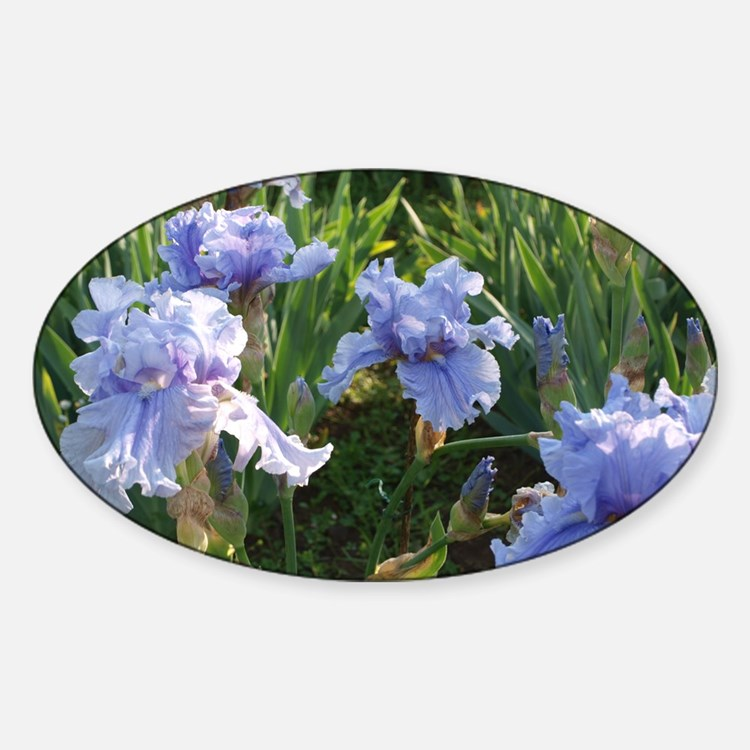 Delicate light blue irises Sticker (Oval)