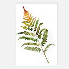 fern Postcards (Package of 8)