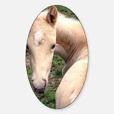 palomino_foal_panel Decal