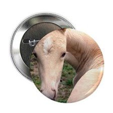 "palomino_foal_panel 2.25"" Button"