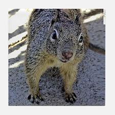squirrel_rnd Tile Coaster