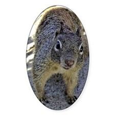 squirrel_smposter Decal