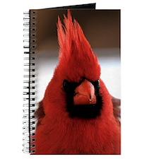 cardinal2_smposter Journal
