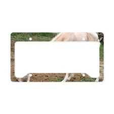 palomino_friends_smposter License Plate Holder