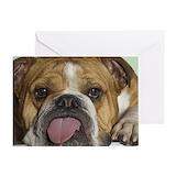 British bulldog Greeting Cards