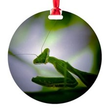 Preying mantis Ornament