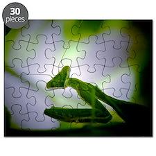 Preying mantis Puzzle