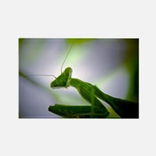 Preying mantis Rectangle Magnet