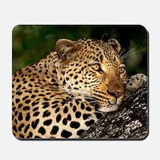 Leopard calander Mousepad