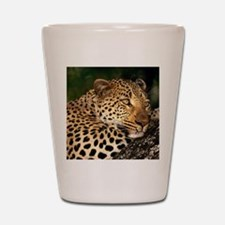 Leopard calander Shot Glass