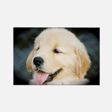 Golden Retriever Puppy Calendar P Rectangle Magnet