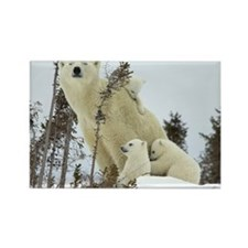 Mama polar bear Rectangle Magnet