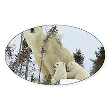 Mama polar bear Decal