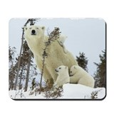 Polar bears Mouse Pads