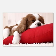 Spaniel greeting Postcards (Package of 8)