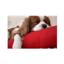 Spaniel note Rectangle Magnet