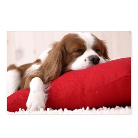 Spaniel note Postcards (Package of 8)