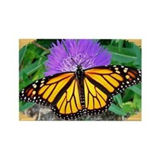 Monarch Butterfly, Calendar Page, Rectangle Magnet